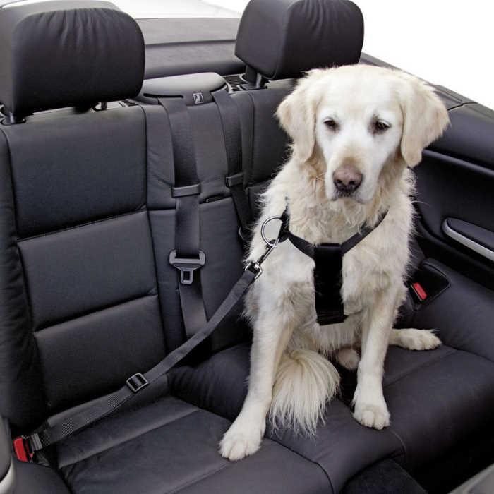 Varnostni pas za psa z oprsnico