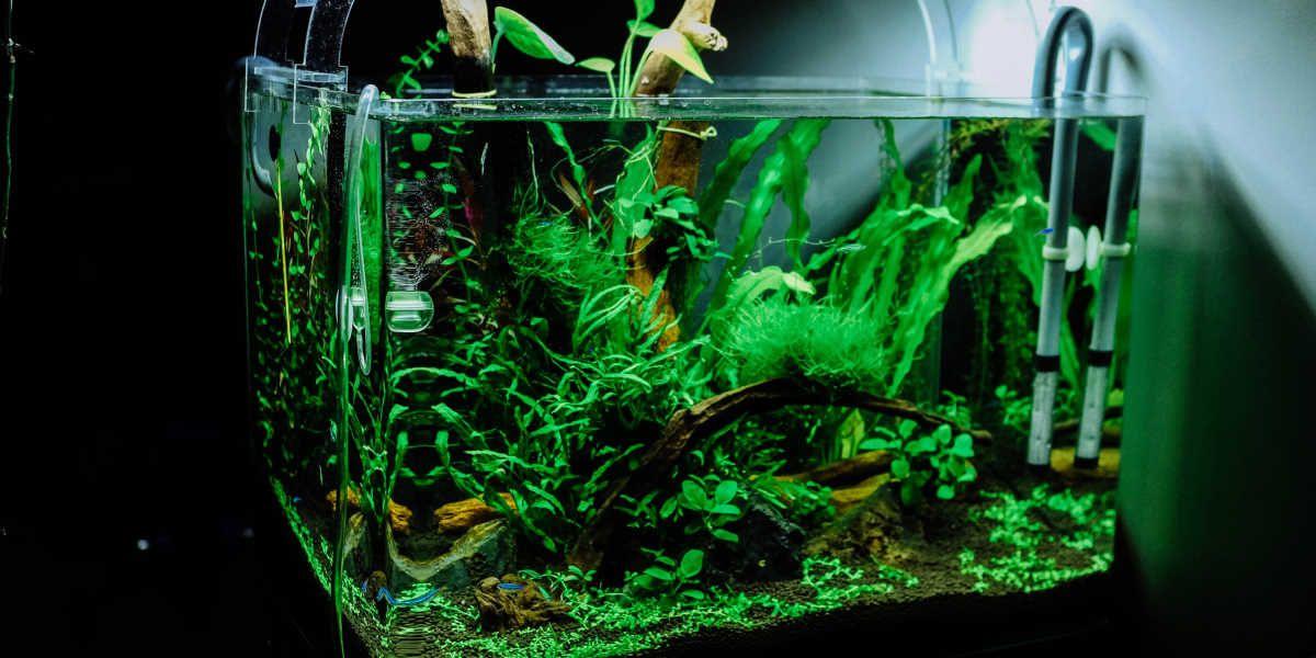 Akvarijski filter