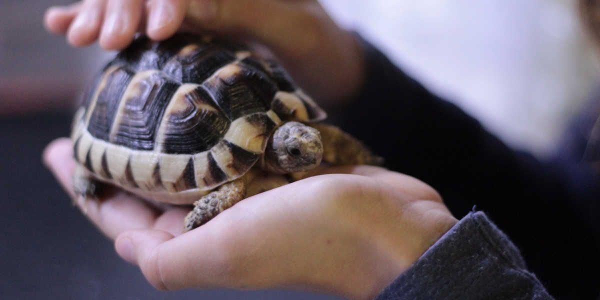 Kopenska želva