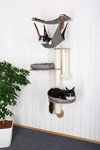 mačji praskalnik za steno