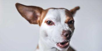 Kako se znebiti bolh pri psu in mački?