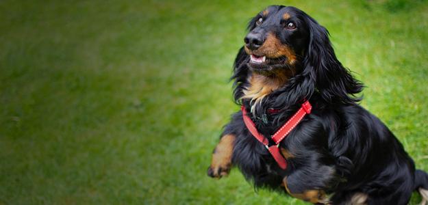 Živalski blog