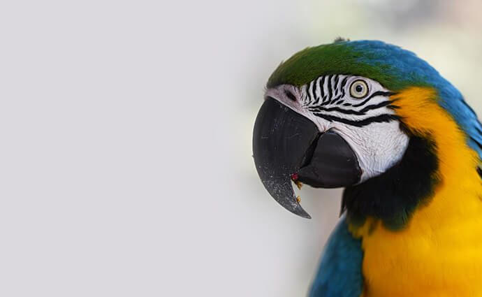 Ptice