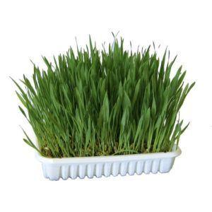 Trava za muce