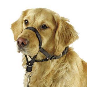 Halti za psa