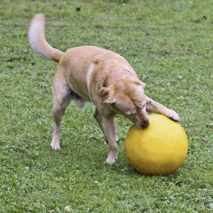 Velika trda žoga
