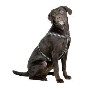 Črna oprsnica za psa