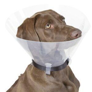 Medicinski ovratnik za psa