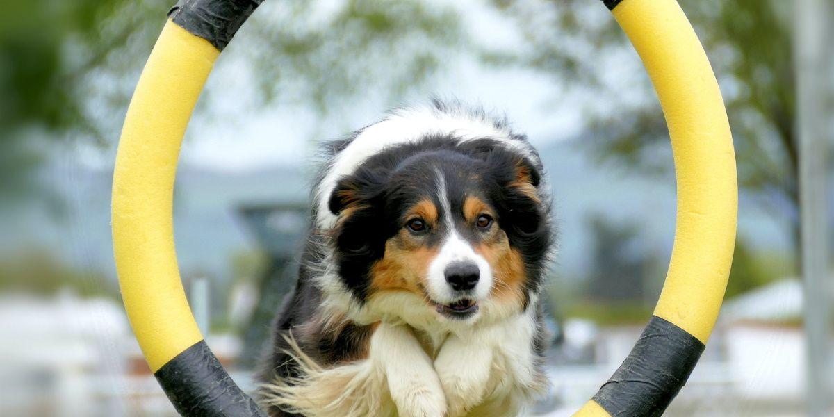 Trening poslastice za pse Pet Rewards Training Snacks
