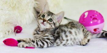 Mačji mladiček v novem domu