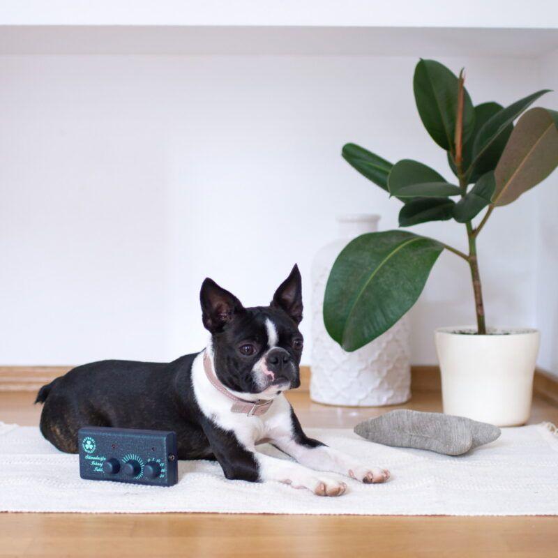 Magnetni stimulator za pse