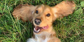 Monoproteinska hrana za pse – zakaj jo izbrati?