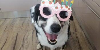 Pasja torta in praznovanje pasjega rojstnega dneva