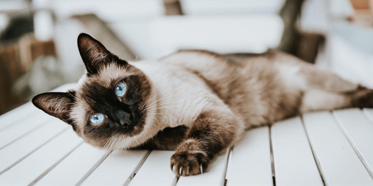 Hrana za mačke Exclusion
