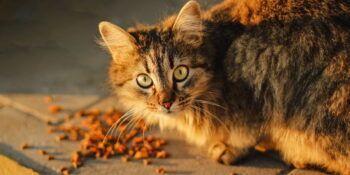 N&D hrana za mačke - VODIČ (5 različnih linij)