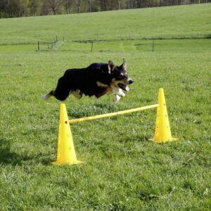 Stožci za agility za pse