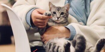 Farmina Vet Life za mačke - veterinarska dietna hrana