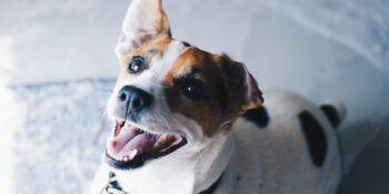 Pasje zobovje - nega in zdravje pasjih zob