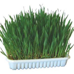 Trava za mačke 100g